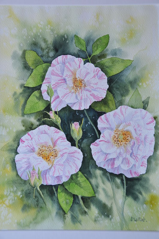 Les Roses Anciennes (30x40)