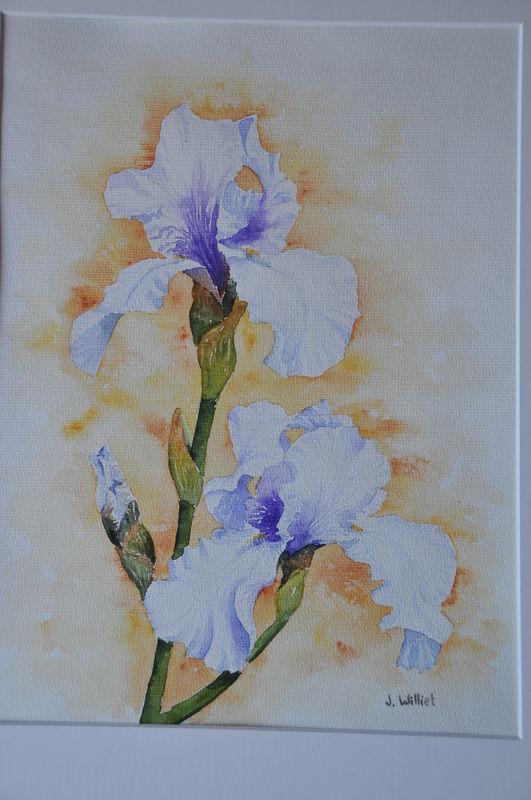 Les Iris Blancs (30x40)