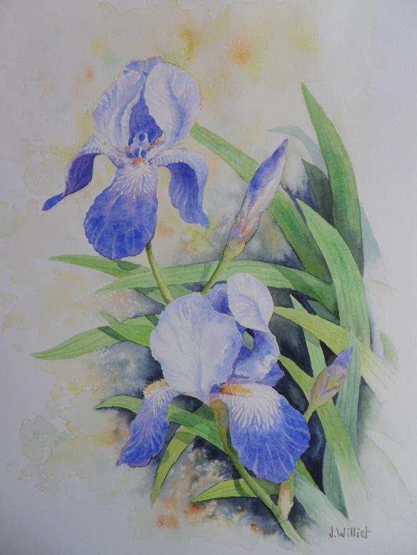 Les iris bleus (2)
