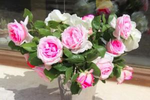 Ce que vivent les roses l'espace d'un matin..
