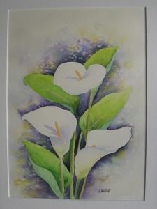 Les arums blancs