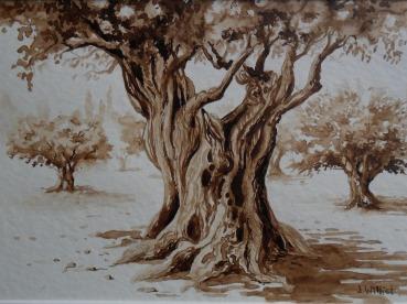 vieux tronc d'olivier