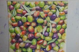 les couleurs des olives