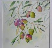 Branche d'olives de Provence