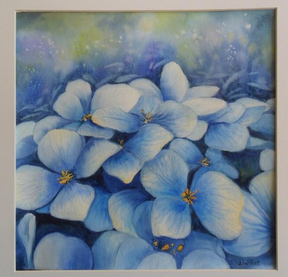Hortansias bleues