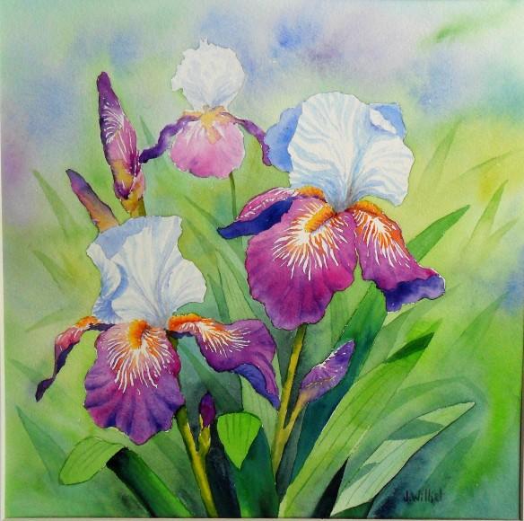 Le bal des iris